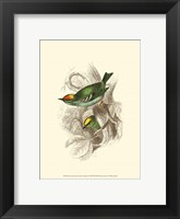 Framed Fire-Crowned and Common Goldcrest
