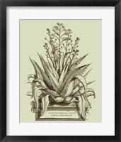 Framed Vintage Aloe IV