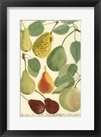 Framed Plentiful Pears I