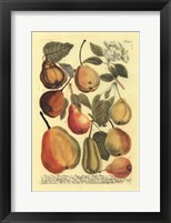 Framed Plentiful Pears II
