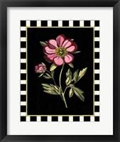 Framed Pink Peony II