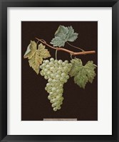 White Grapes Framed Print