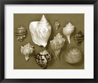 Framed Shell Collector Series I