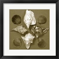 Framed Shell Collector Series III