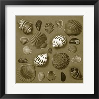 Framed Shell Collector Series V