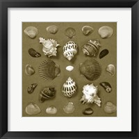 Framed Shell Collector Series VI