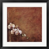 Orchid Series I (Simplicity I) Framed Print