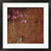 Framed Orchid Series II (Simplicity II)