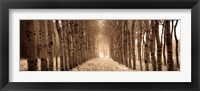 Framed Shimmering Forest