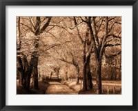 Smokies Road Framed Print