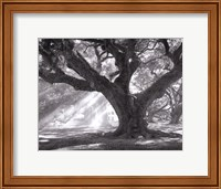 Framed Andrew Oak, Afternoon Light