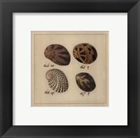 Framed Shells on Rattan I