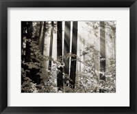 Framed Misty Forest