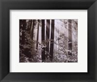 Framed Misty Forest