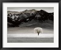 Framed Solitary Tree
