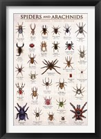 Framed Spiders & Arachnids
