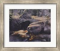 Framed Boulder Bruin