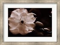 Framed Gardenia I