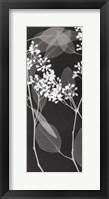Eucalyptus IV Framed Print