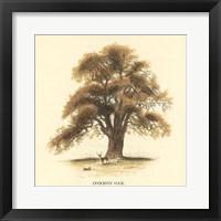 Framed Common Oak