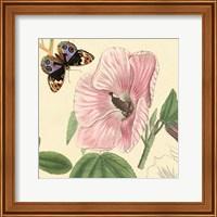 Framed Hibiscus
