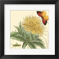 Framed Star Thistle