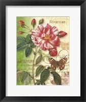 Framed Rose Splendor I