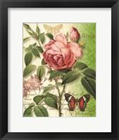 Framed Rose Splendor II