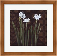 Framed Narcissus on Brown I