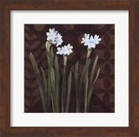 Framed Narcissus on Brown I