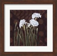 Framed Narcissus on Brown II