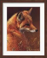 Framed Curious Red Fox