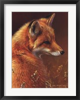 Framed Curious Red Fox