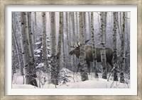 Framed Walk in the Woods