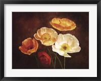 Framed Poppy Perfection II