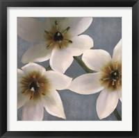 Framed Lily Parfait I