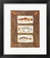 Framed Sport Fish II