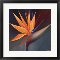 Framed Bird of Paradise I