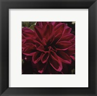 Framed Dahlia Delight