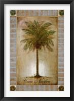 Framed Cocos Nucifera