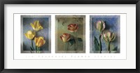 Framed Flower Studies I