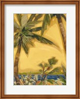 Framed Bahama Splendor II