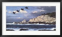 Framed Shorebirds at Point Lobos