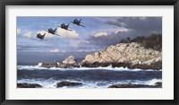 Framed Shorebirds at Point Lobos