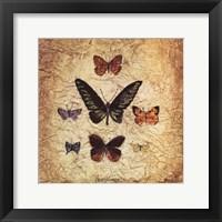 Framed Papillons III