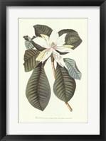 Framed Magnolia Folis Oblongis