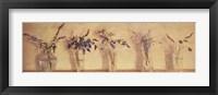 Framed Plantas Aromticas