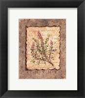 Framed Vintage Herbs - Thyme