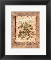 Framed Vintage Herbs - Parsley