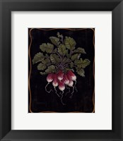 Framed Bouquet Of Radishes l